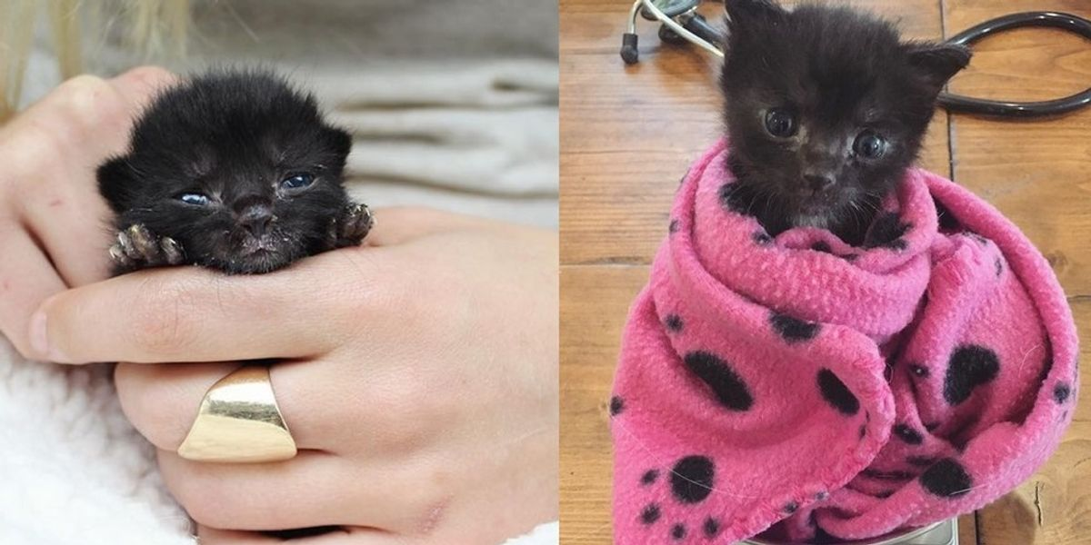 Orphaned Baby was So Tiny They Didn't Know He Would Survive, A Week Later..