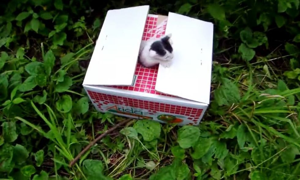 man saves 6 kittens from remote mountain road