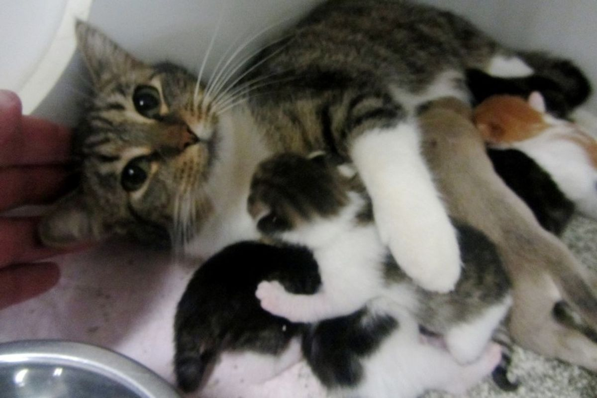 shelter cat moms adopt orphaned puppies