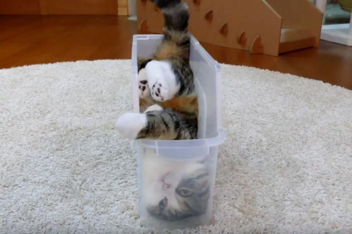 maru fits in slim box