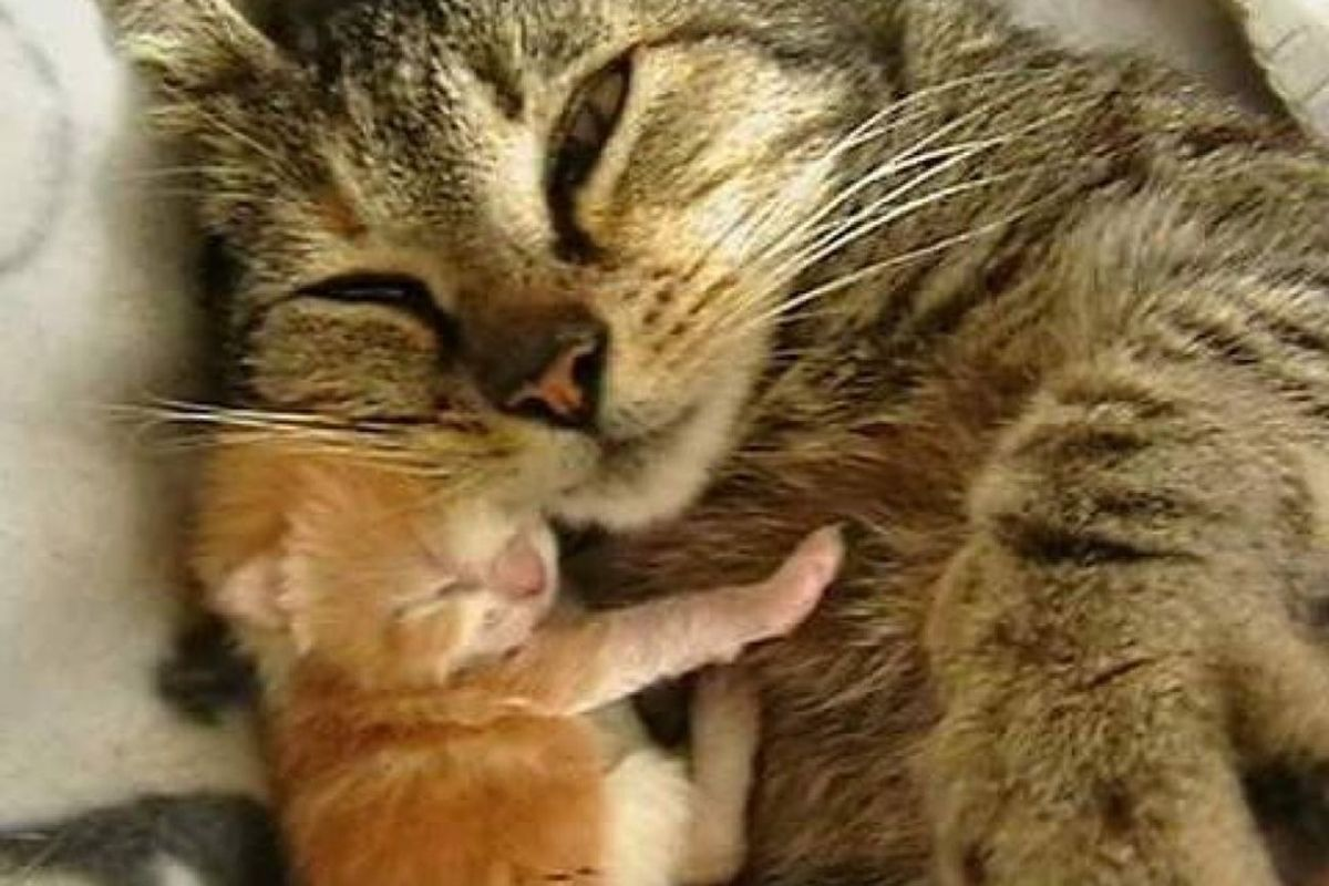 stray cat picks woman to help her with her babies