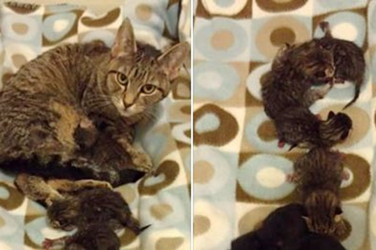 Tabby Cat Surprised Shelter Staff with 9 Mini Tabbies!