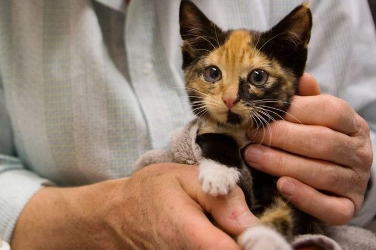 calico cat rescued from being wedged between sheds