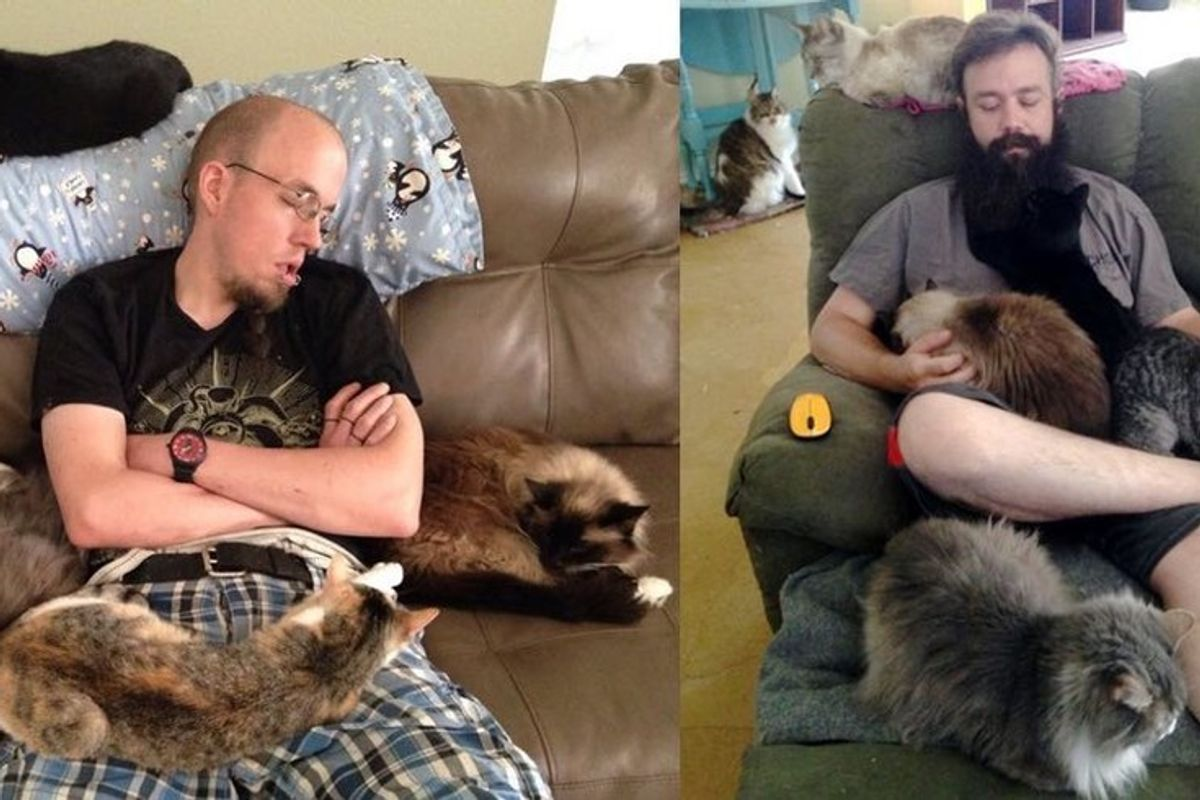 These Guys Show Us How to Properly Volunteer at a Cat Sanctuary.