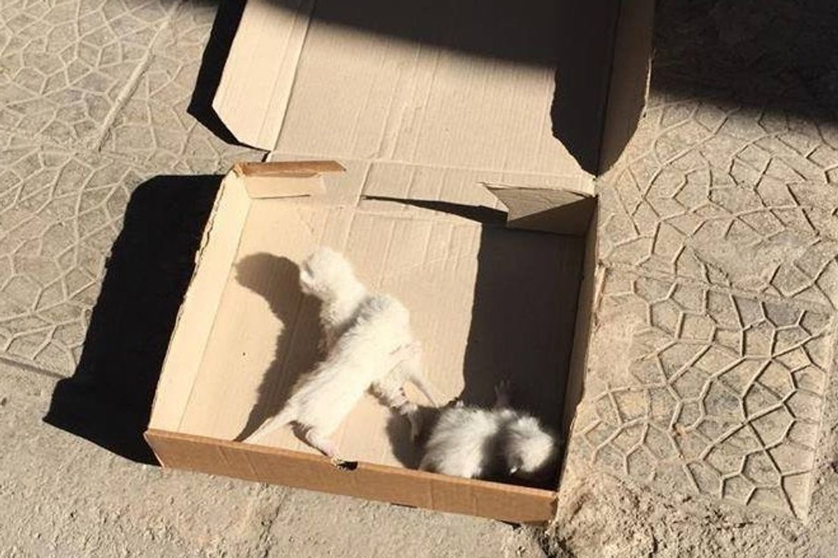 Woman Finds 3 Helpless Kittens on the Street and Gives Them What They Desperately Need