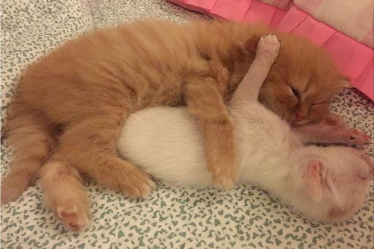 Tiny Kittens and Cat Mom Take in a Tinier Orphaned Kitten and Love Him Like Family