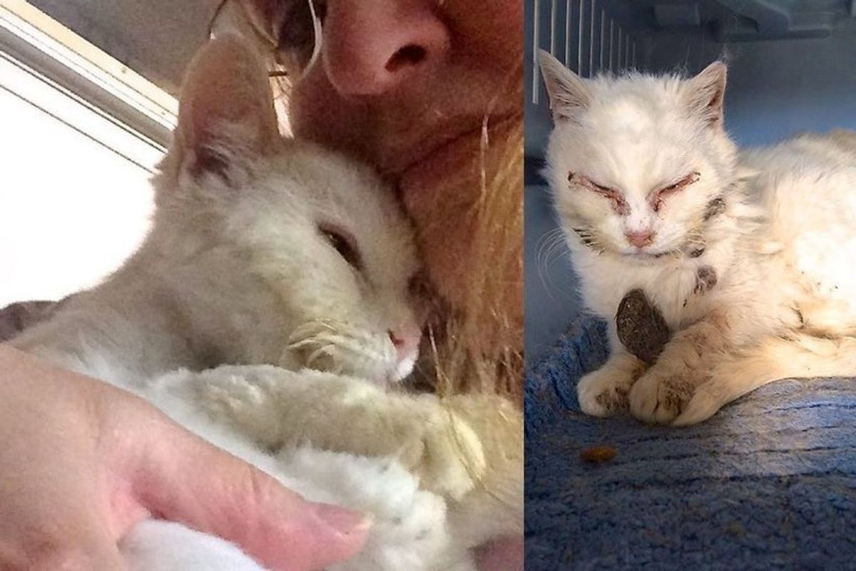 Feral Cat Saved by Kind Woman and Felt Loved for the First Time