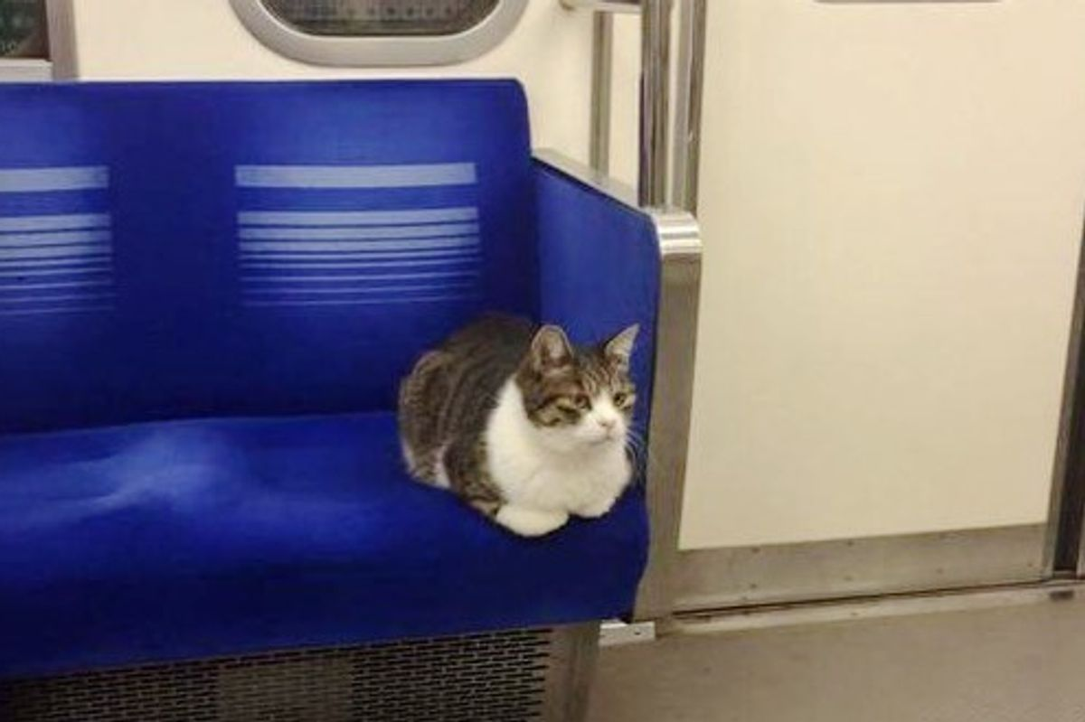 This Cat Takes Regular Rides on Tokyo Subway Train All By Himself