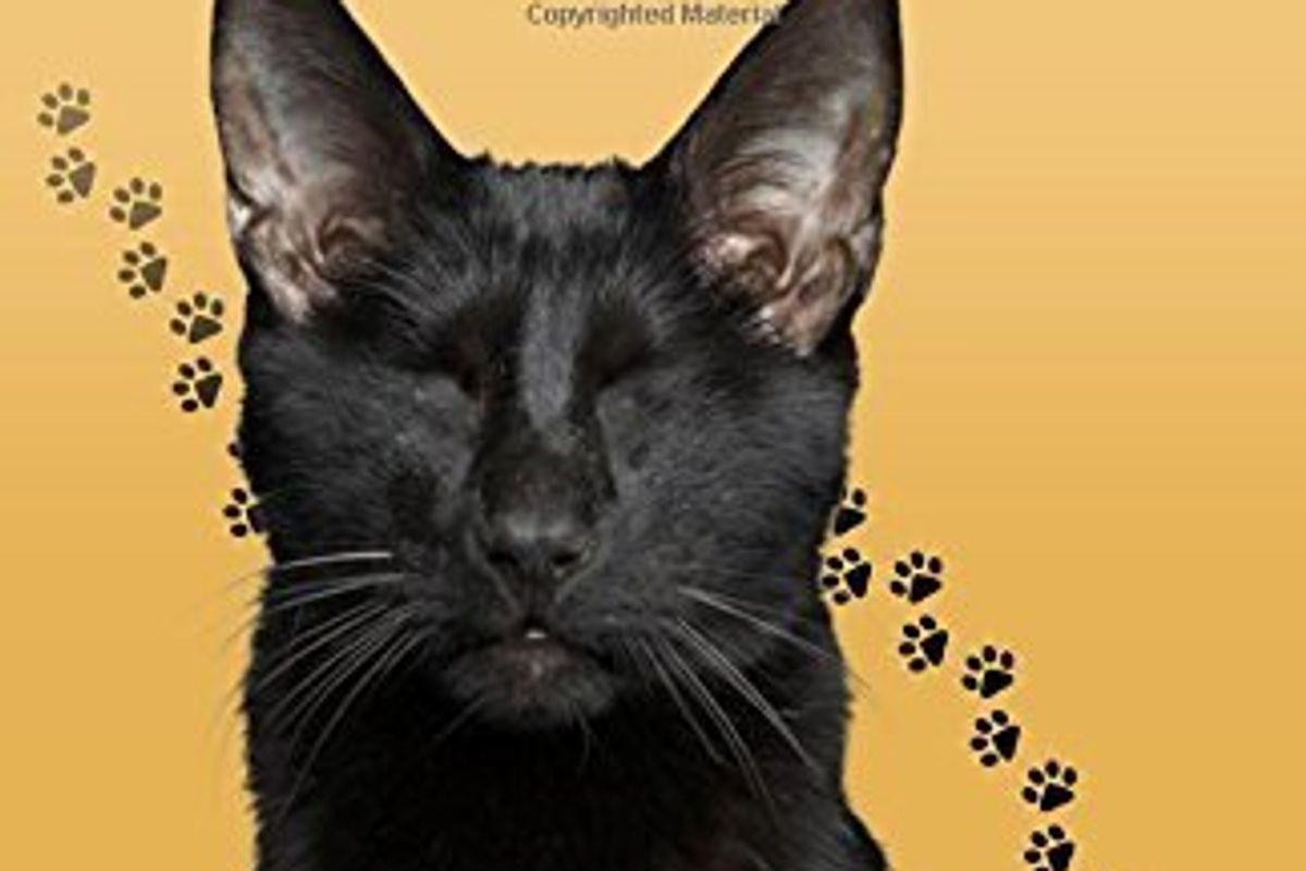 Homer: The Ninth Life of a Blind Wonder Cat (Sequel)