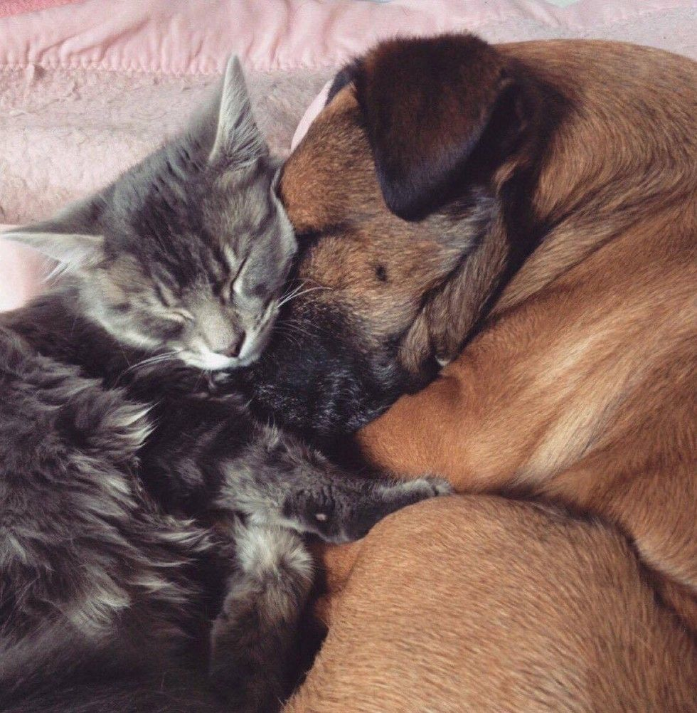 cat cares for dog with epilepsy