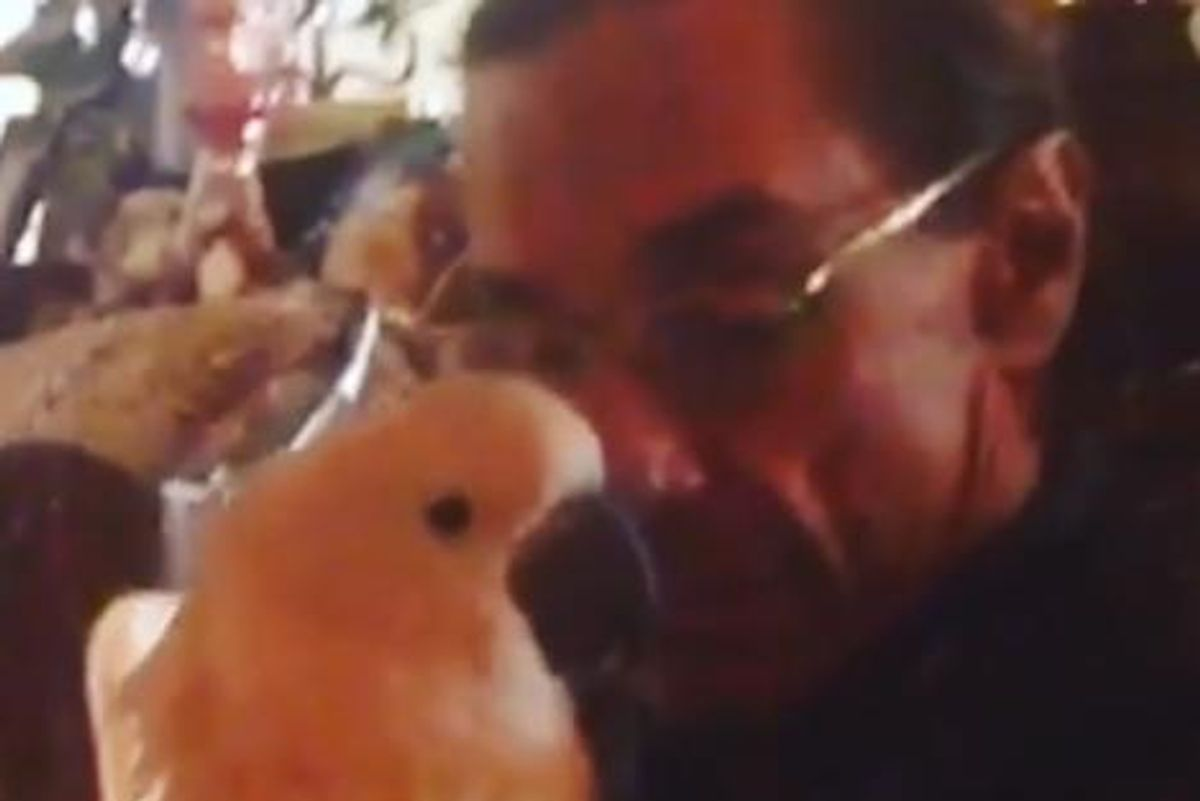 Start Your Day Off With This Insta-Video of Iggy Pop's Pet Cockatoo Nibbling His Face Stubble Off