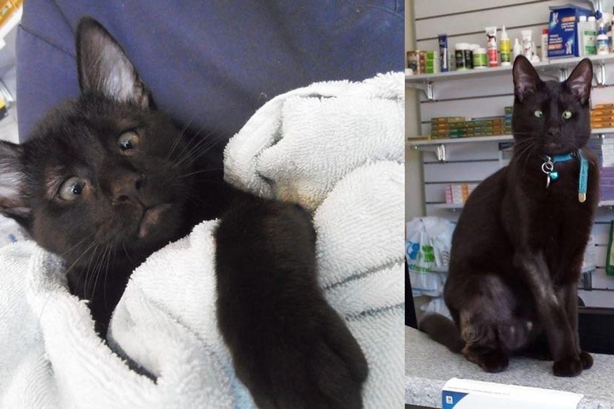 Vet Clinic Saves Cross-eyed Cat Abandoned on Doorstep, Cat Returns the Favor.