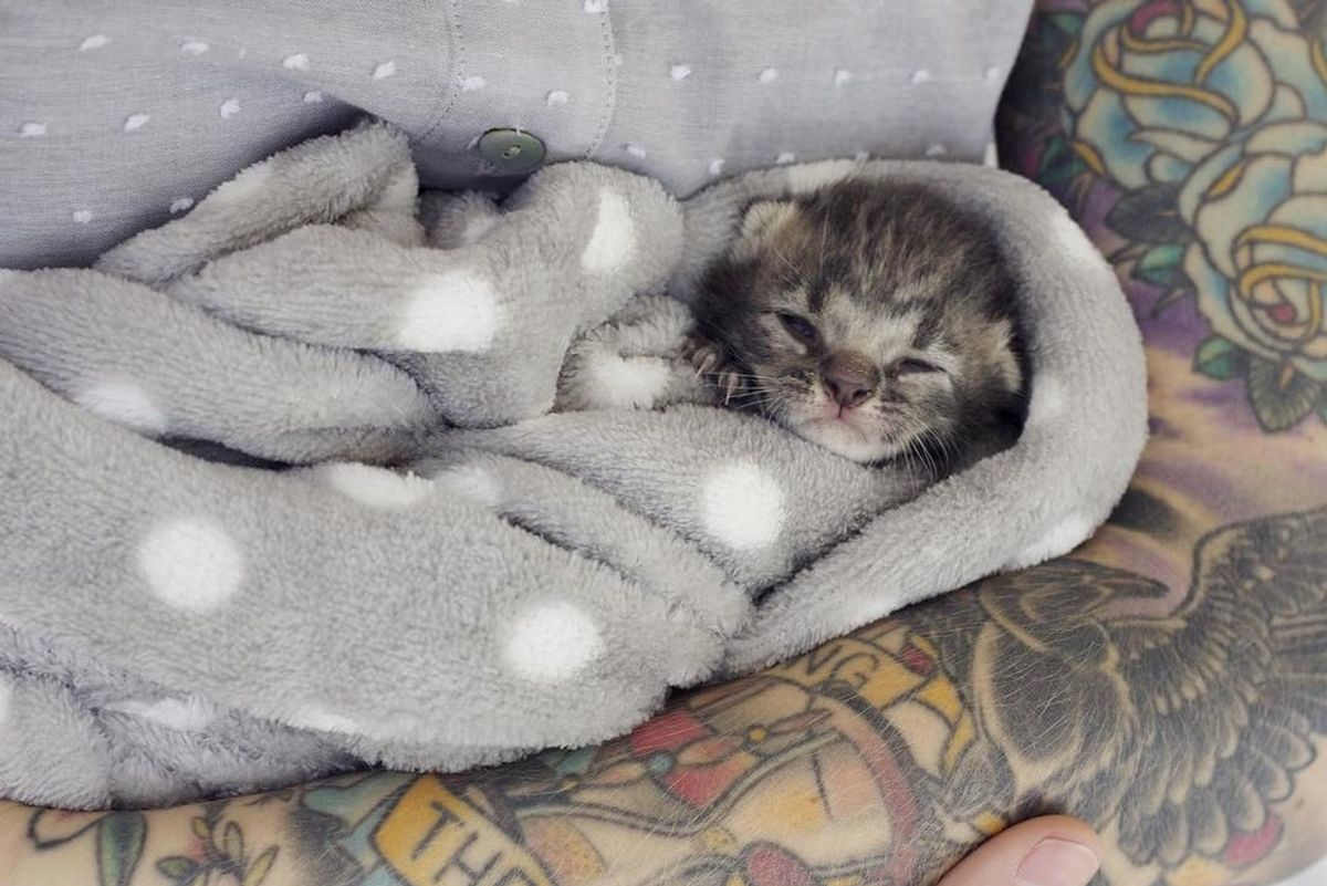 Tiny Kitten Lost Her Siblings But Found Comfort and Love from Another Orphaned Baby