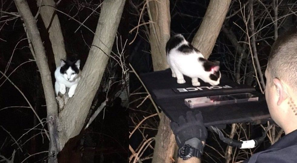 Police Use Red Laser Beam to Coax Cat Stuck Up Tree Down to Safety