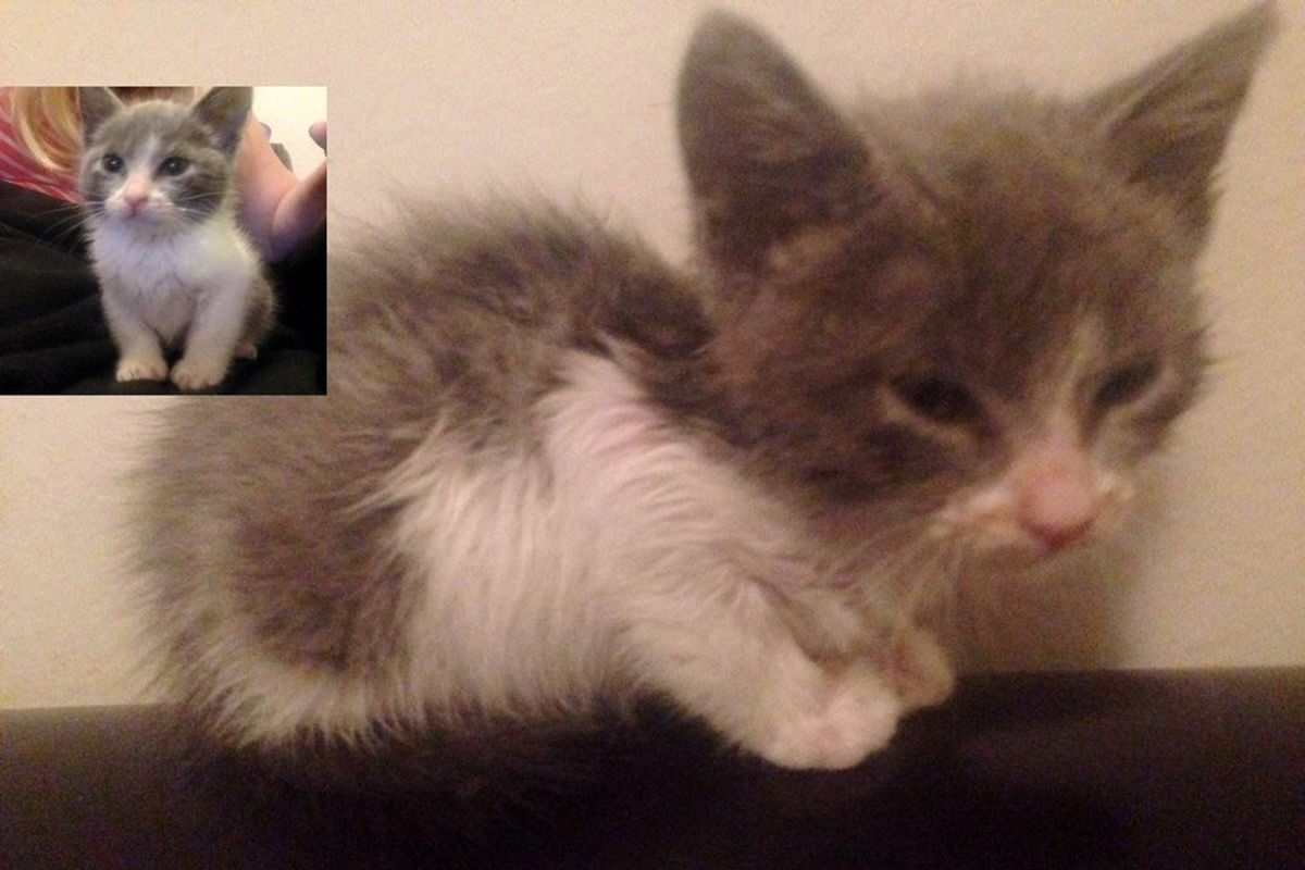 Kitten Saved by Dog from Middle of Street, The Difference After Sleeping in a Warm Bed and Getting Lots to Eat...