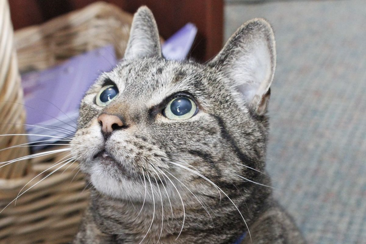 Tabby Cat Showed Up on Doorstep at Retirement Community and Kept Going Back for Love