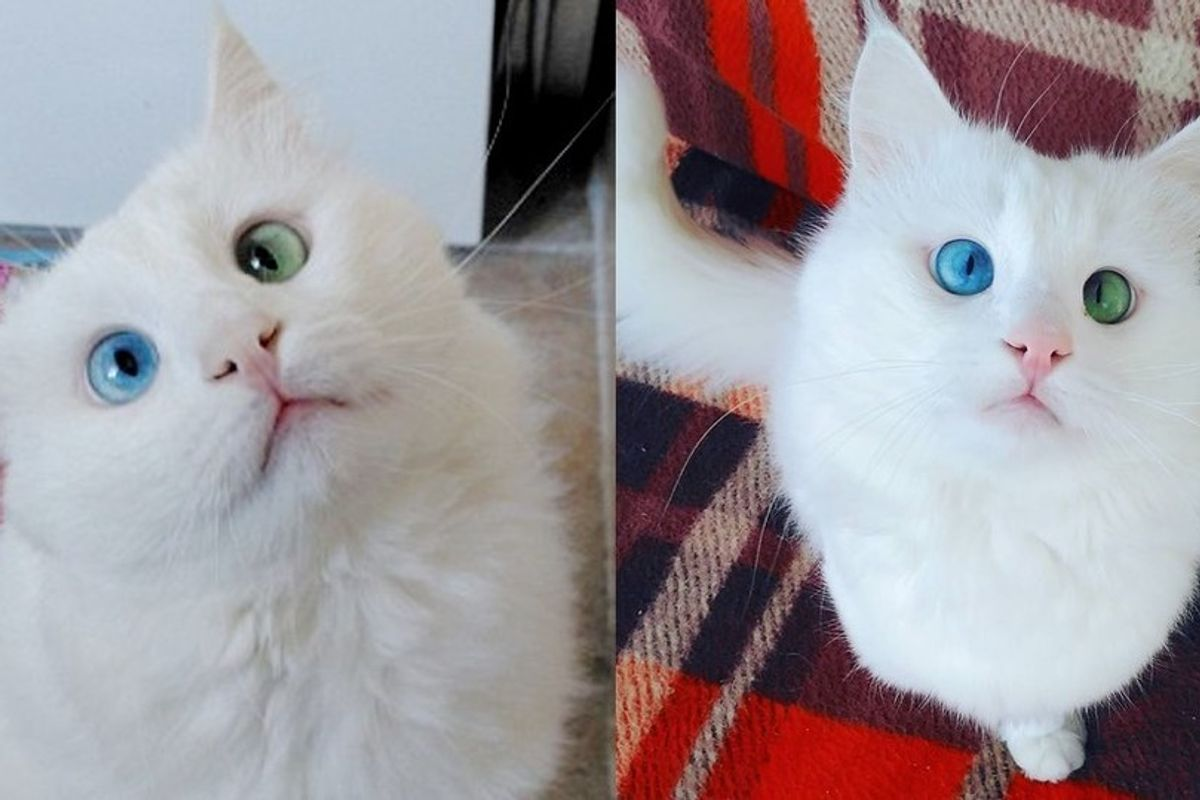 This Slightly Cross-eyed Kitty Will Mesmerize You With His Distinctive Eyes