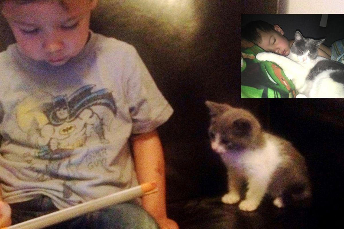 kitten found abandoned on street bodyguard little brother