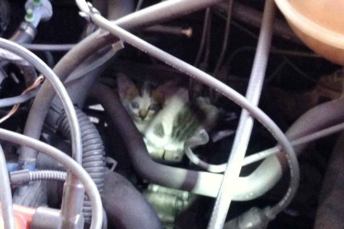 Vehicle Starts Meowing, They Are Surprised by What They Find