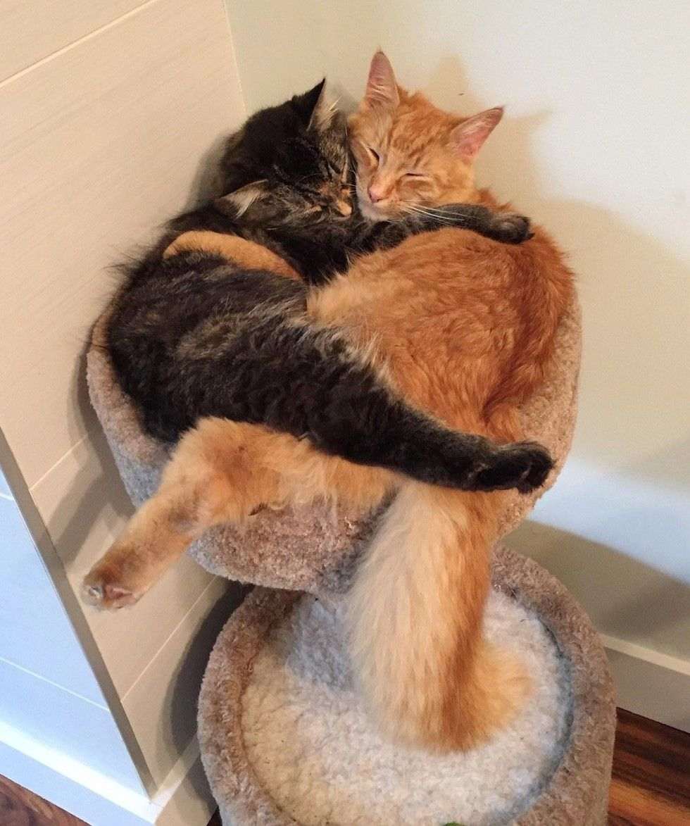 Cats Outgrowing Their Bed Together