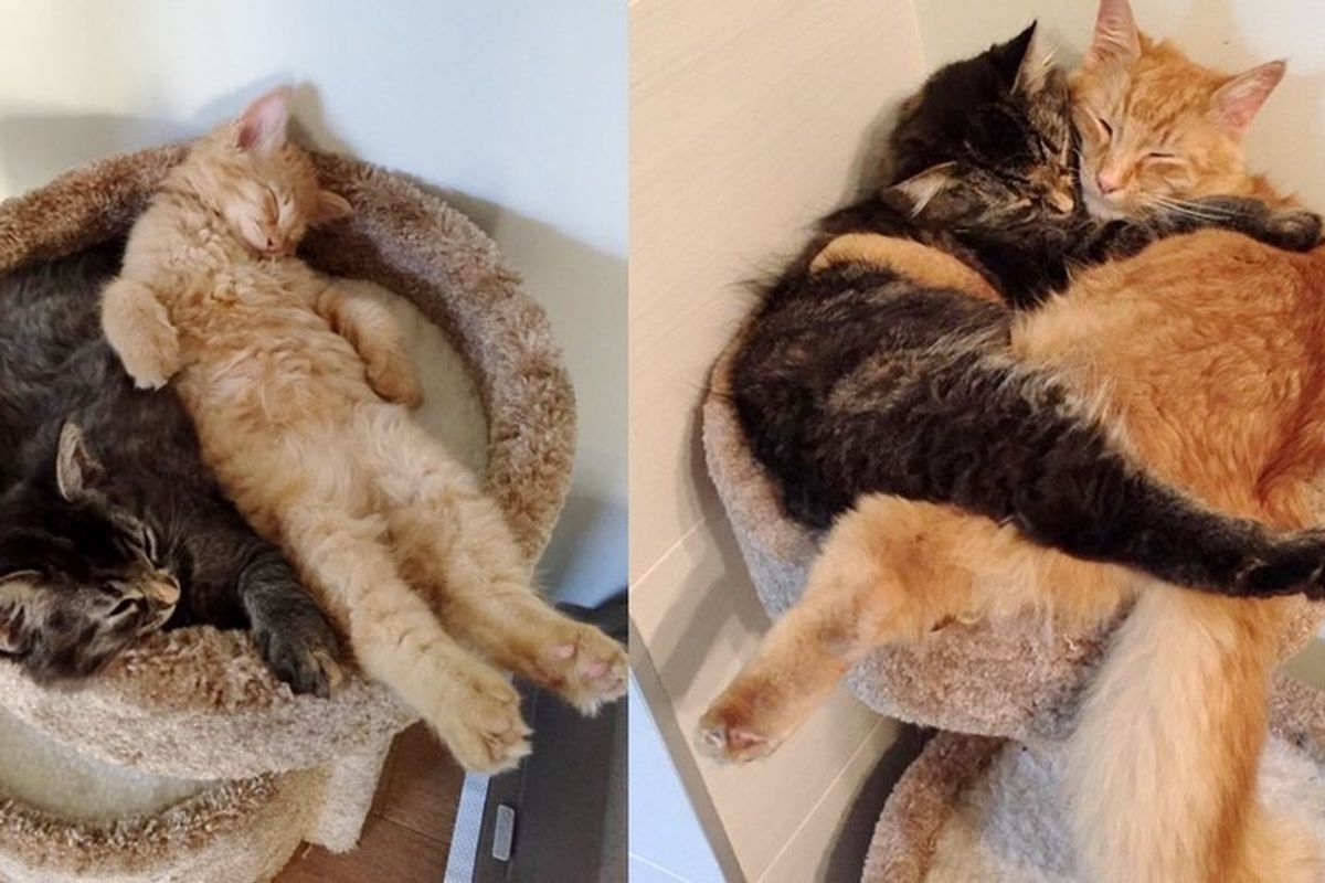 snuggling cats outgrowing cat bed