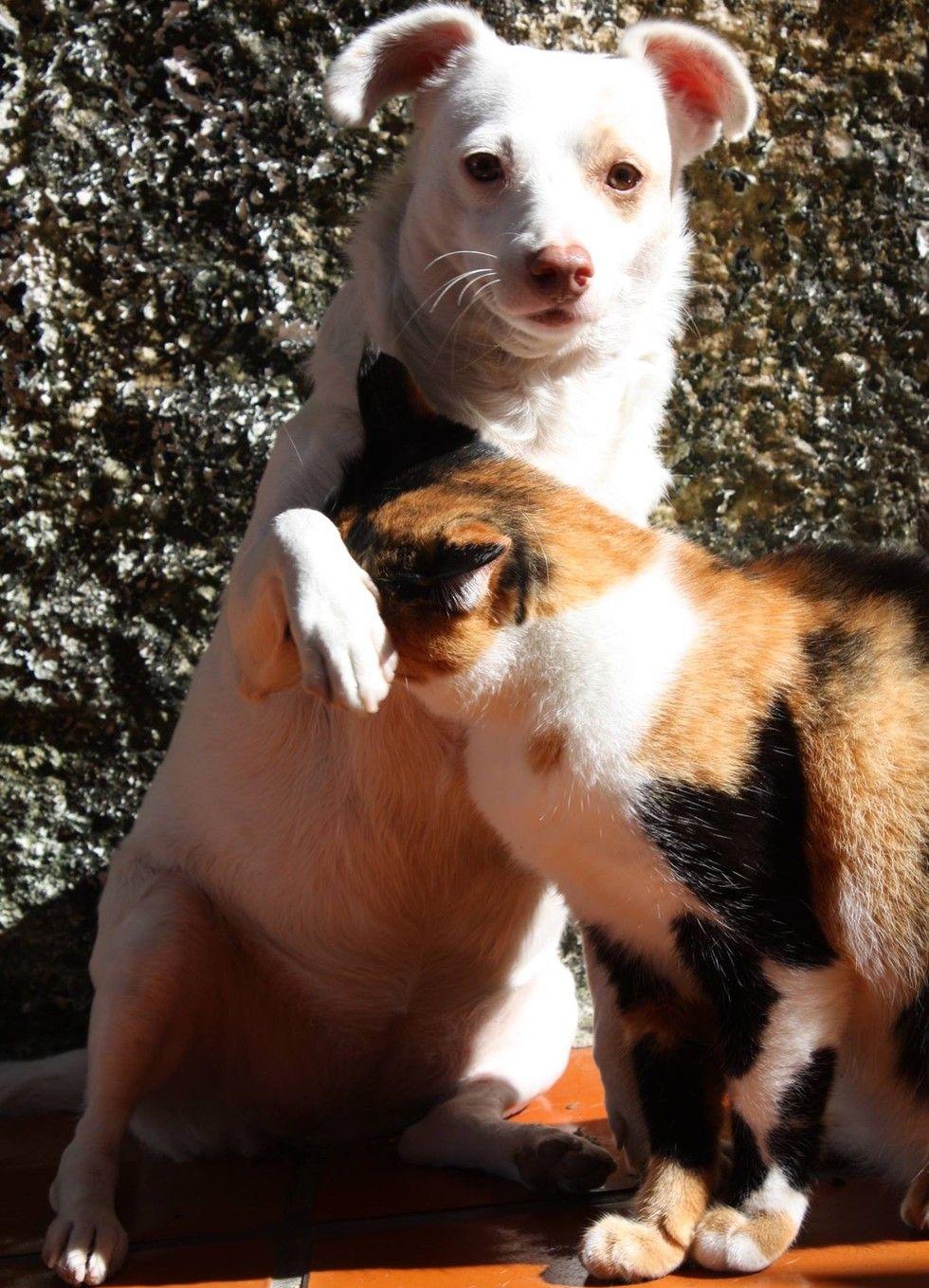 calico cat snuggles dog love