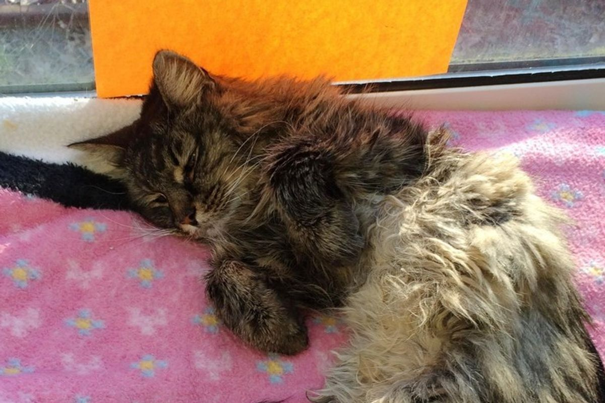 Forrest is 20, He's Spending His Retirement in Sunny Window with a Note at Shelter