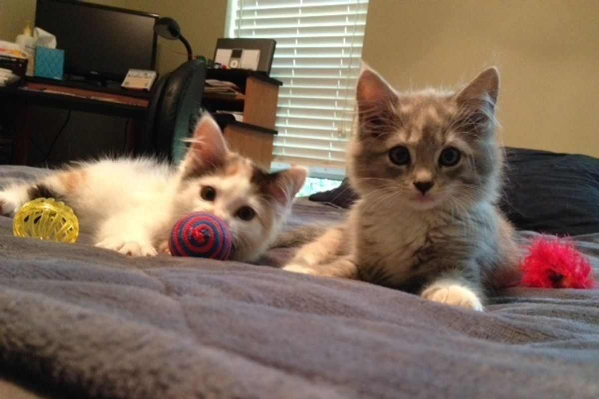rescued stray kittens then now