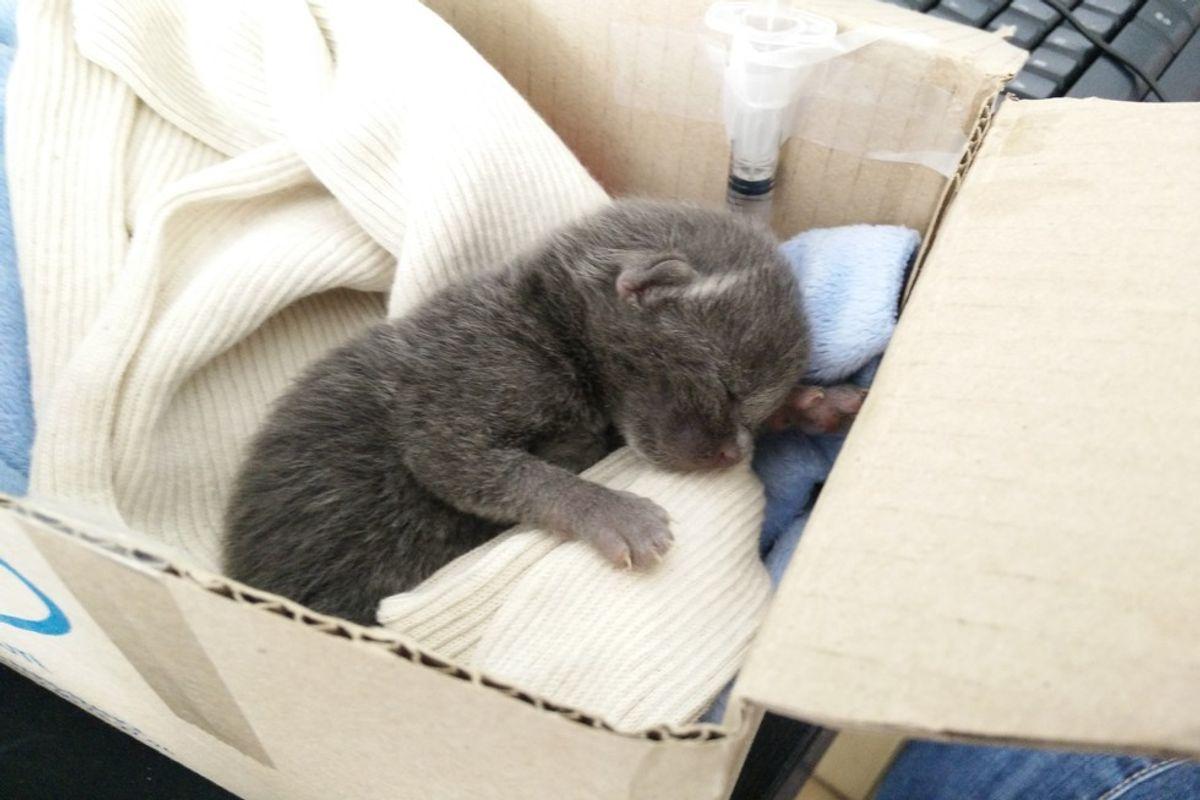 rescued orphaned kitten refused to die