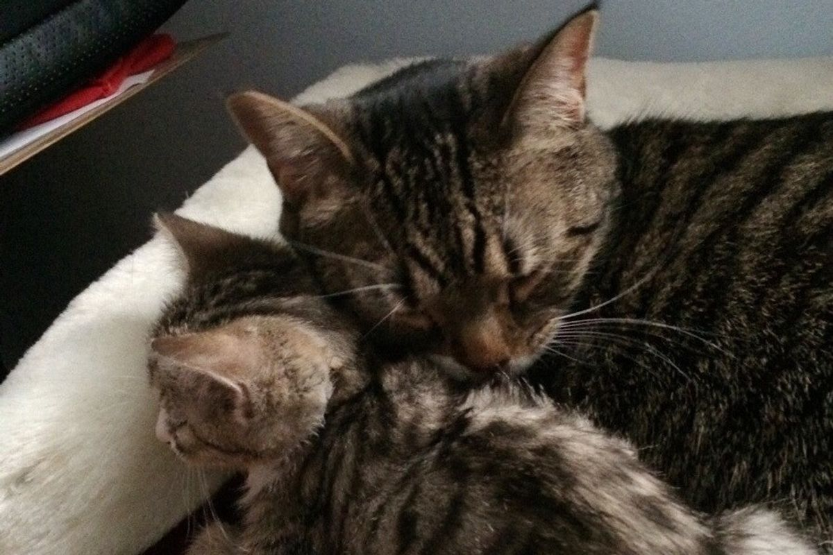 The Joy When Mama Cat Gets Adopted Together with Her Kitten
