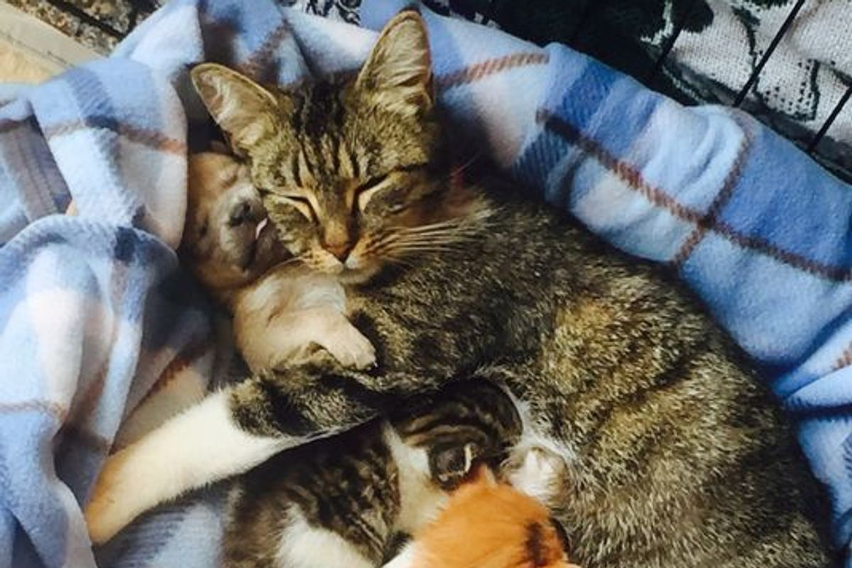 Rescue Cat Gives an Orphaned Puppy the Love He Has Been Looking for