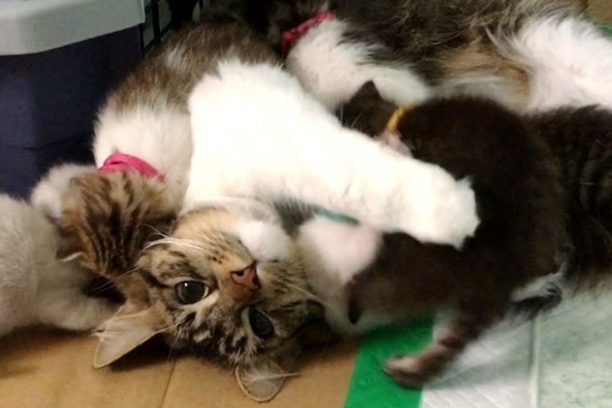 Cat Saves 9 Orphaned Kittens the Same Way She Was Saved By a Husky
