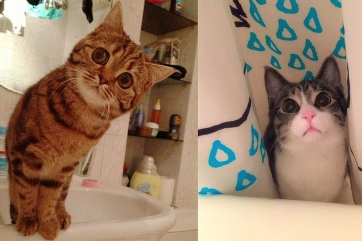 10+ Kitties Wouldn't Leave Their Humans Alone When They are in Bathroom