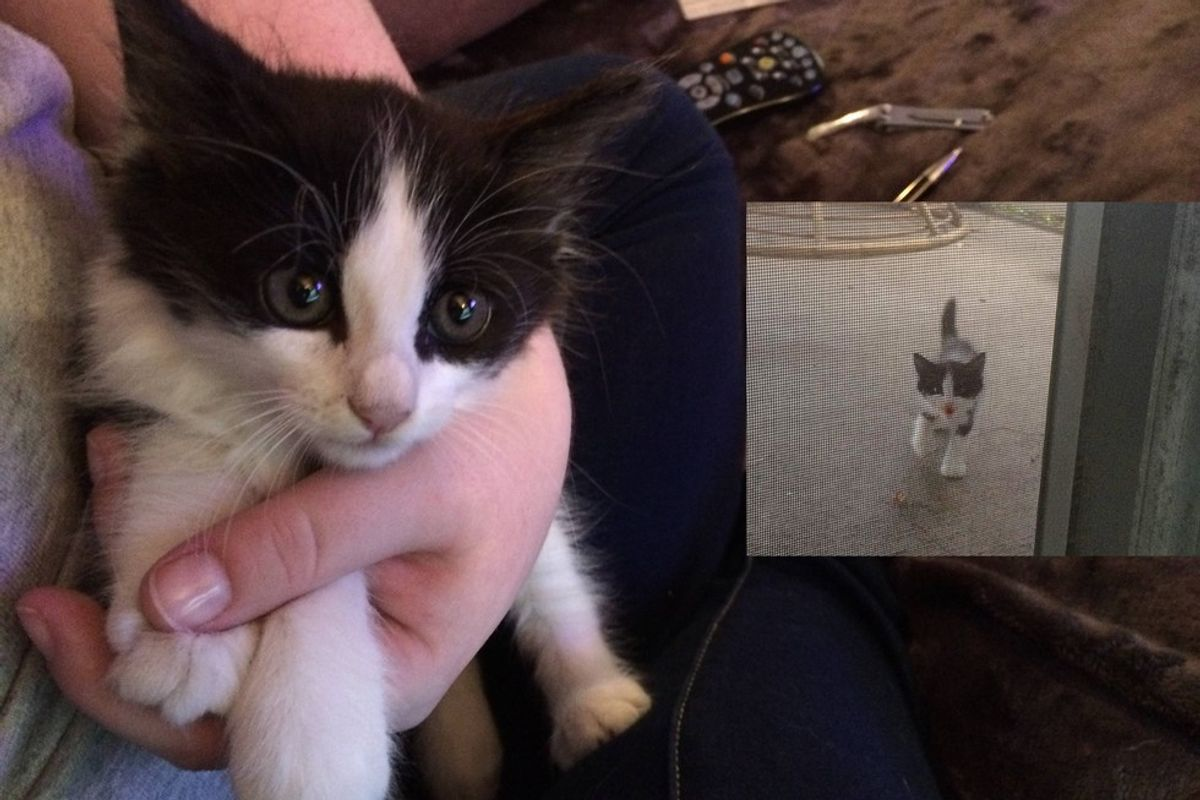 Stray Kitten Walks into Woman's Life When She Needs Him the Most