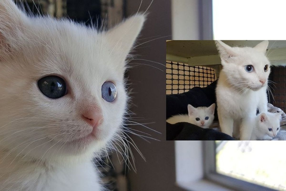 Odd-eyed Cat Mom Found Along with Her Two Mini Me's Behind Vet's Office