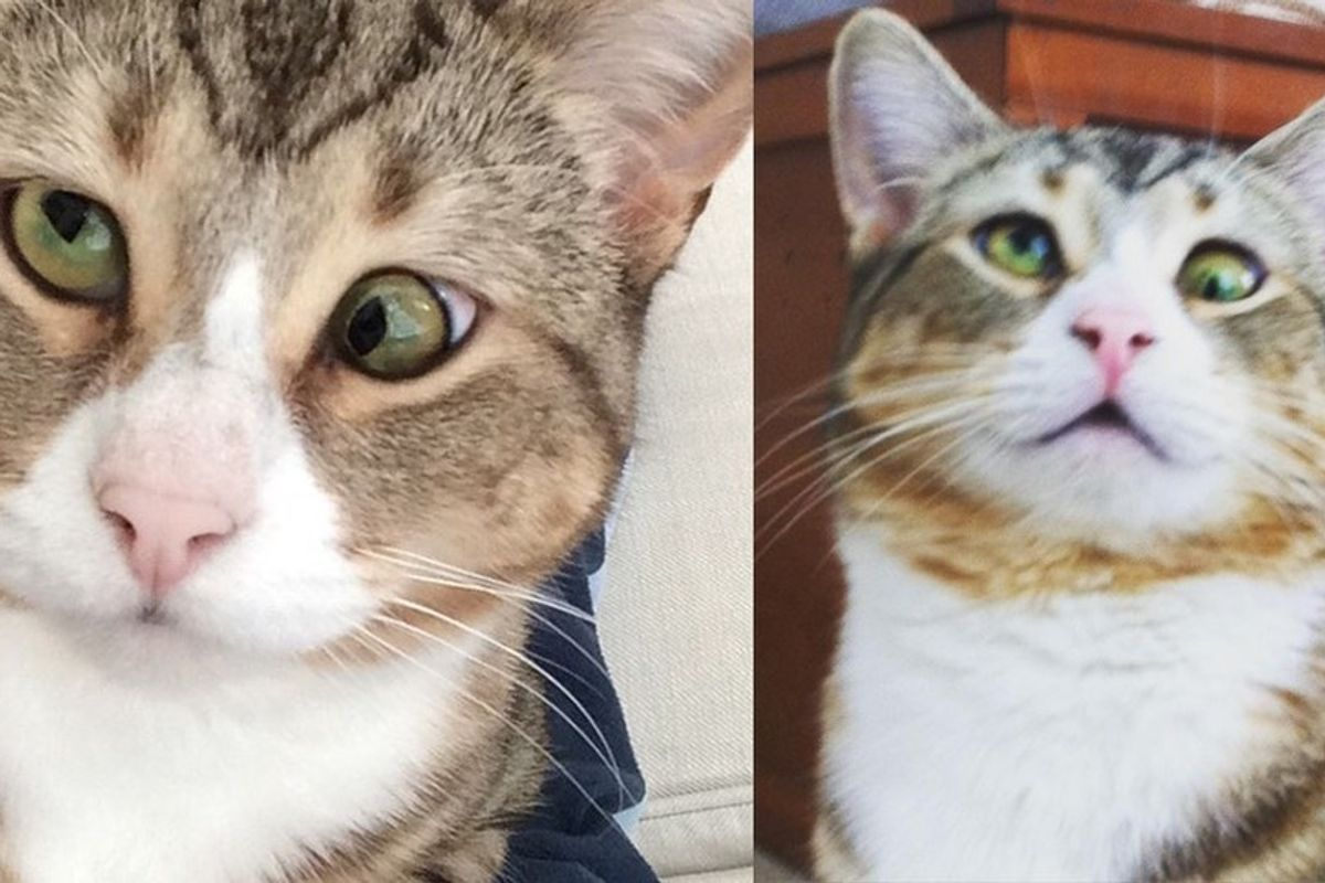 Cat with Googly Eyes from Rescue to Living the High Life