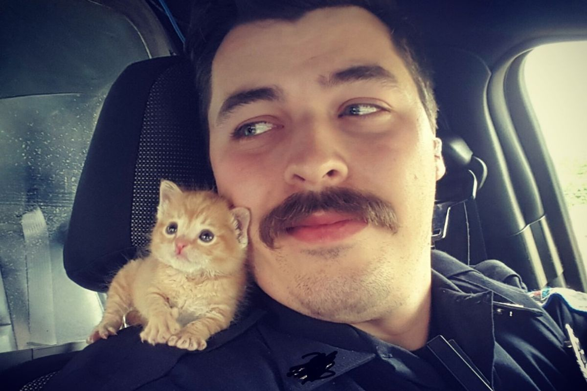 He's Rescued and Found His New Partner, Who Thought the Stache Was His Mom.. (with updates)