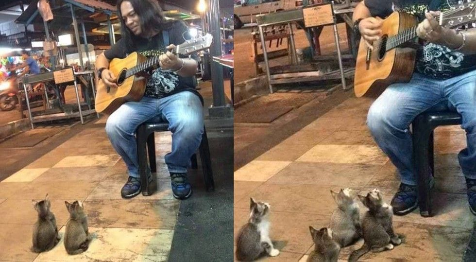 Man Serenades to 4 Kittens and Keeps Them Enthralled