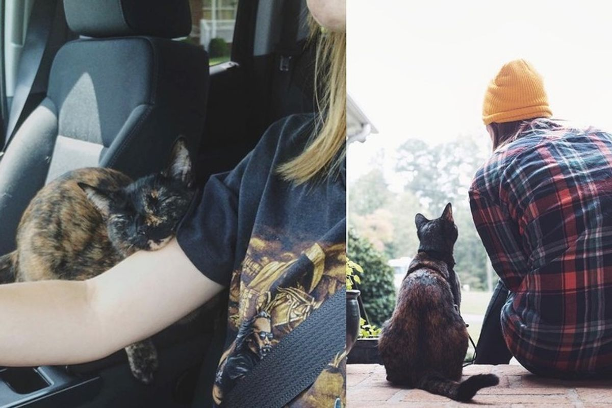 Tortie Cat Falls into the Heart of Her Rescuer and Follows Her on Different Adventures
