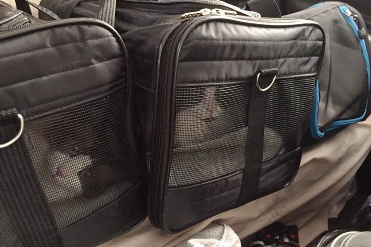 Man Broke Into House to Save 3 Cats from Out of Control Wildfire in Fort McMurray
