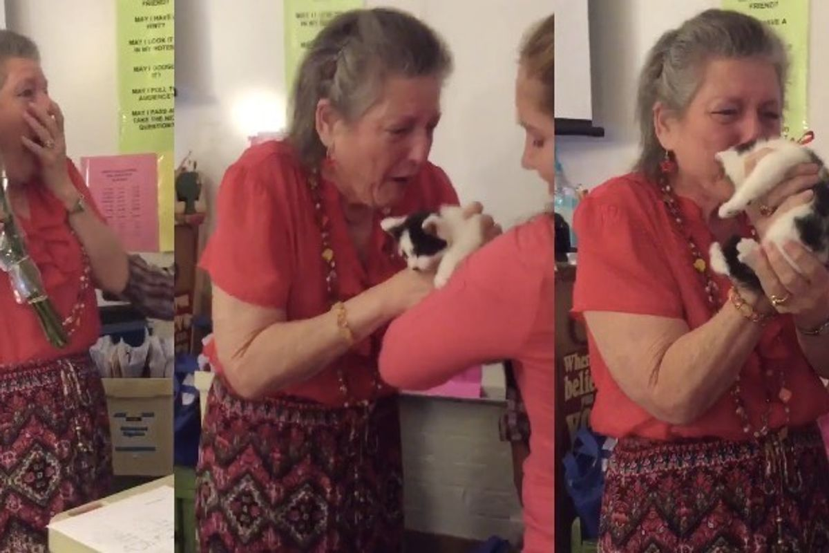 Teacher Gets a Heartwarming Surprise After Her Cat Passed Away