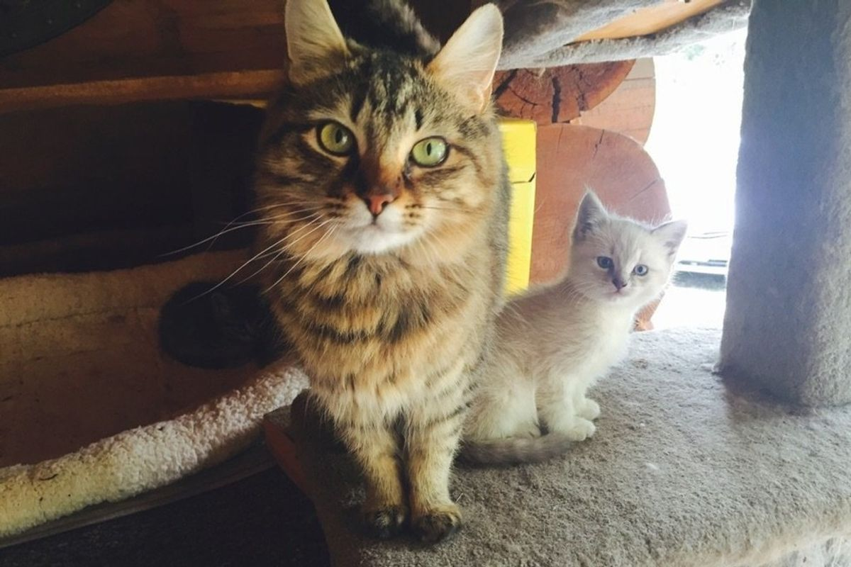 Cat Mom Wants to Meet Woman Before She Adopts Her Baby