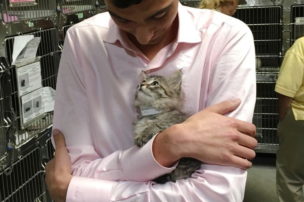 Shelter Kitten Chooses Man to Be Her Forever Human