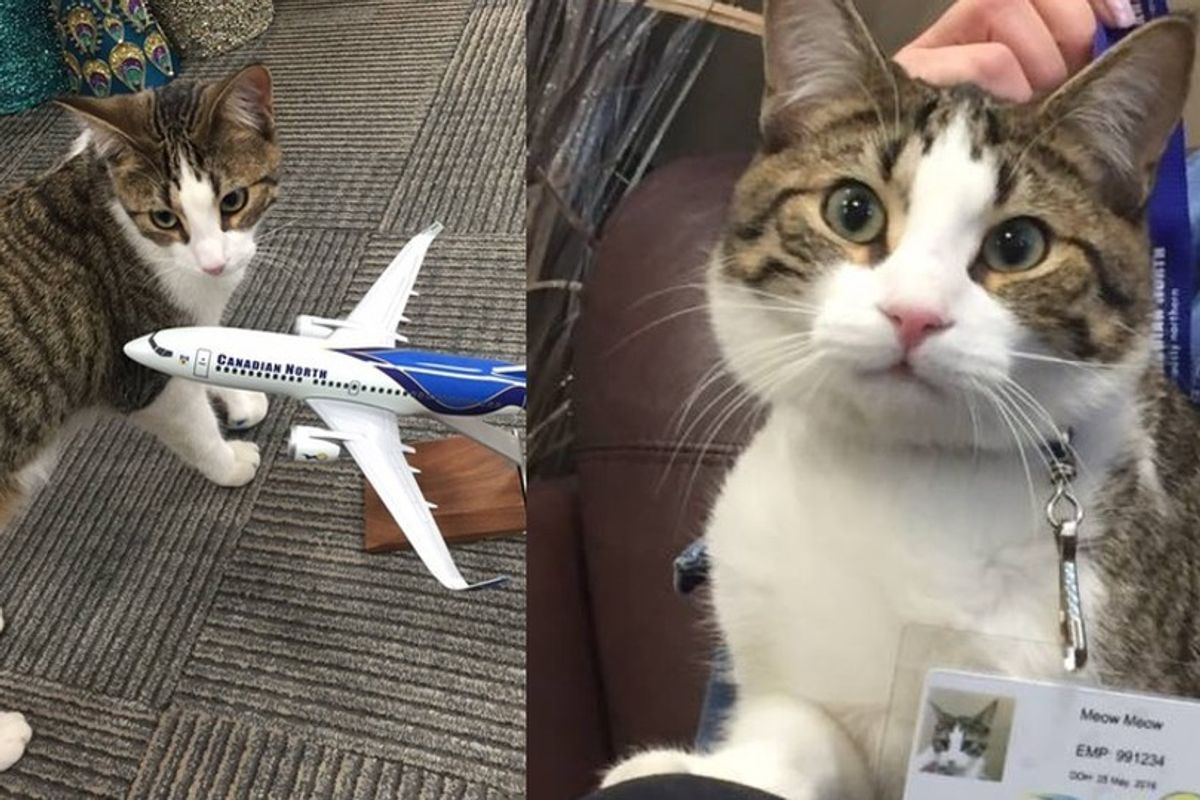 Canadian Airline Looks After Cat for Evacuee and Even Gives Cat Her Very Own ID