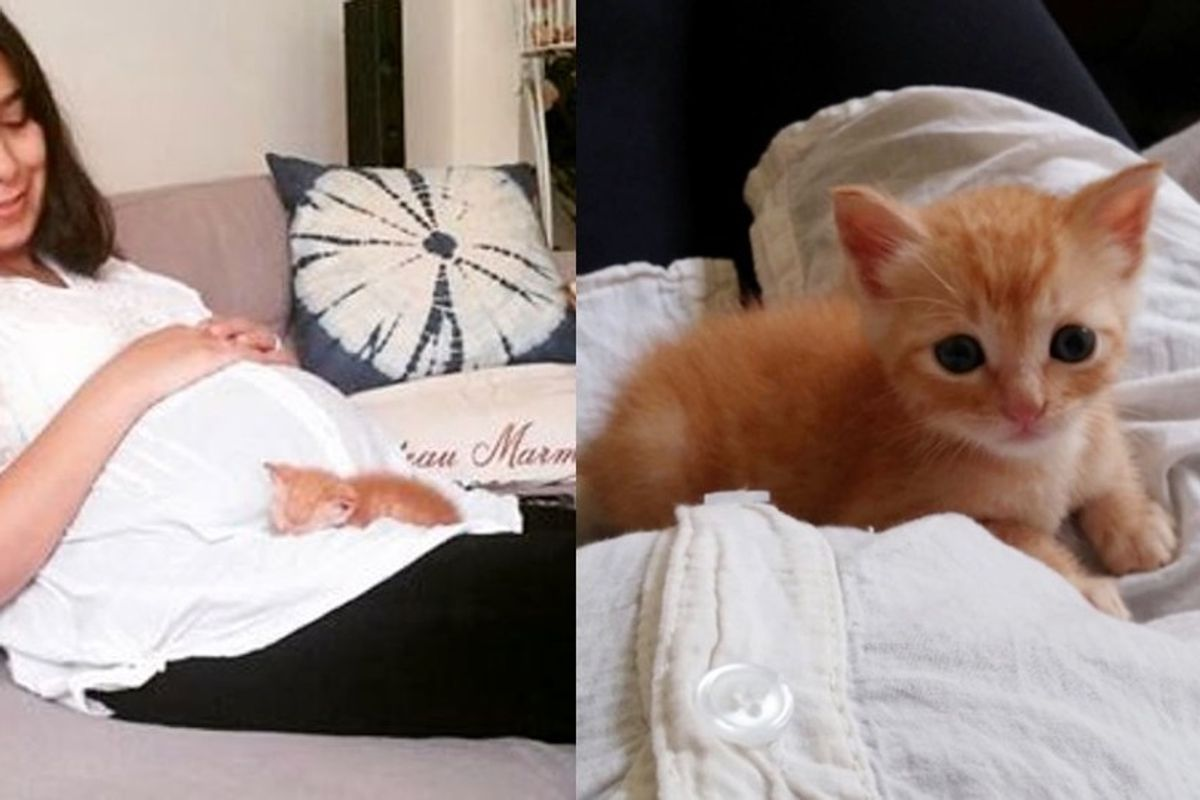 Woman Saves Orphaned Kitten, Now He Can't Stop Cuddling with Her and the Baby in Her Belly