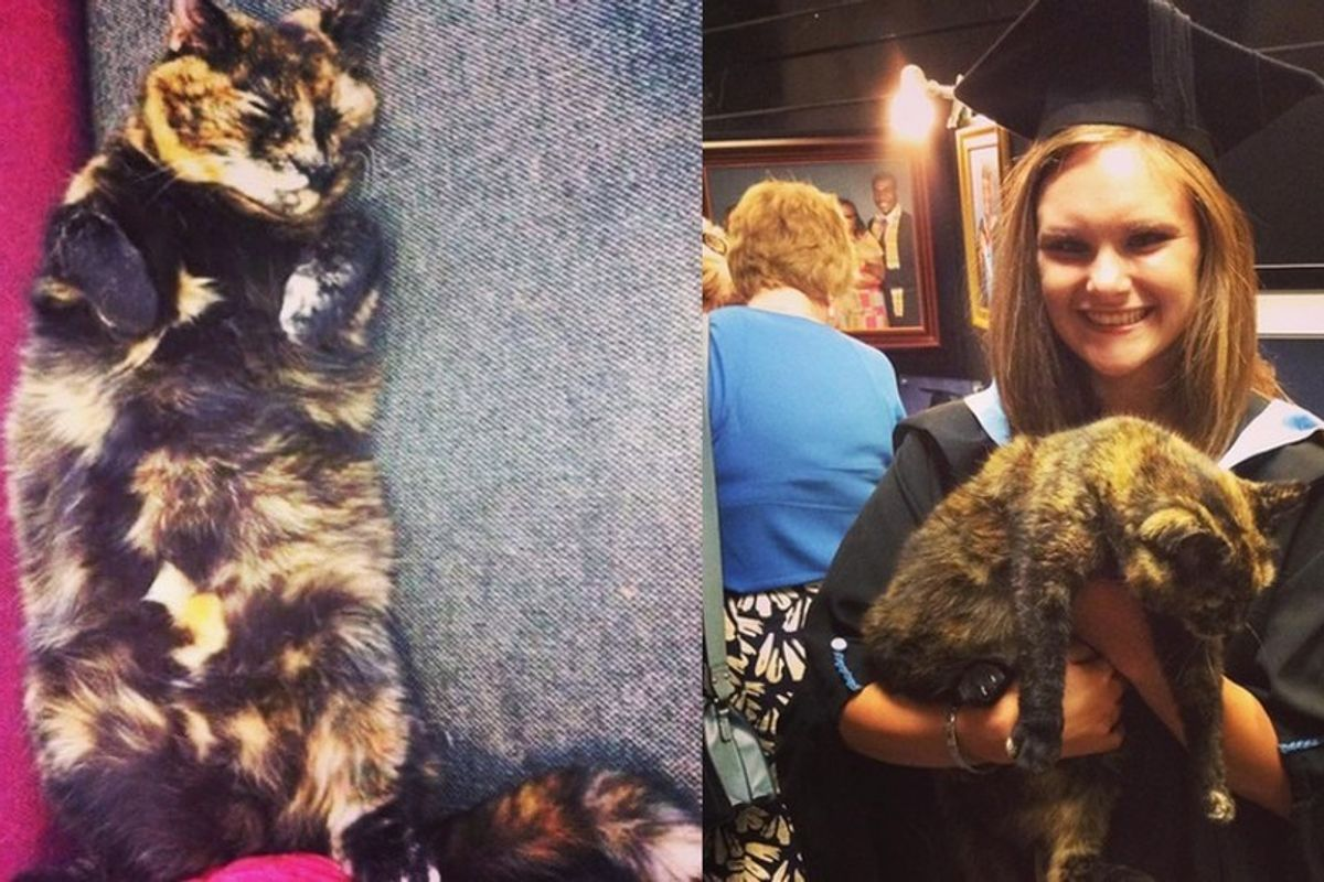 After 14 Years, Tortie Cat Becomes Honorary President for Students' Union