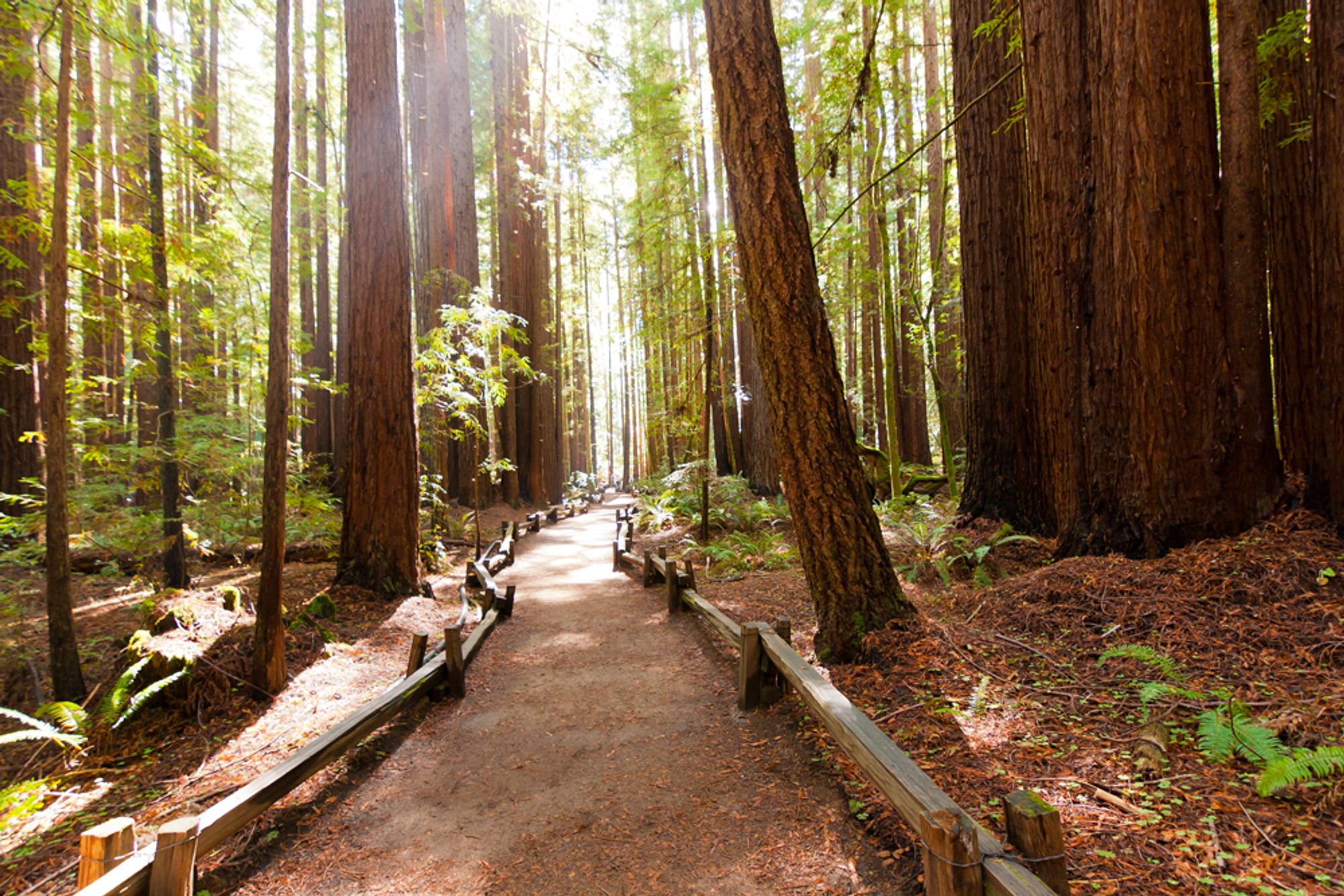 The Bay Area's Best Redwood Hikes