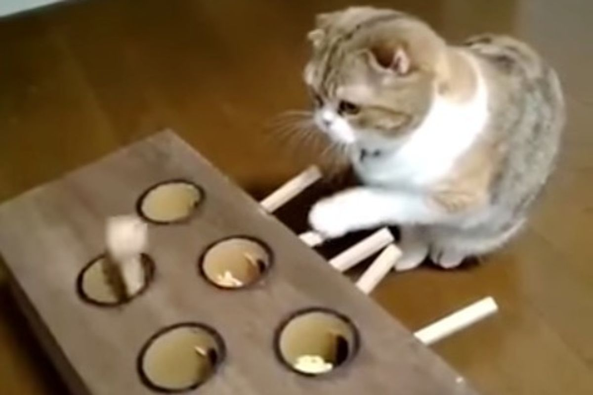 Man Built an Ingenious Toy to Keep His Cat Totally Entertained