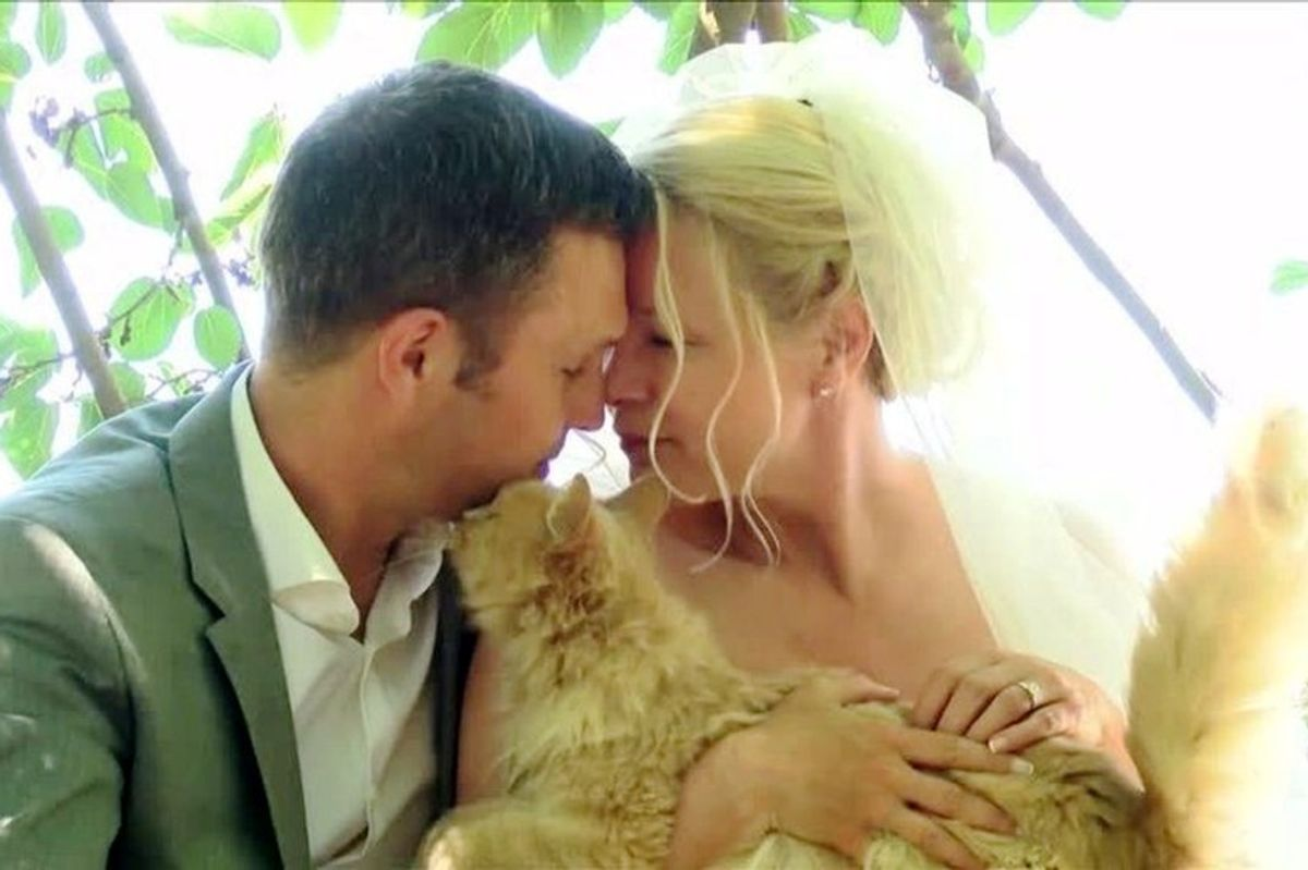Canadian Couple Celebrates Their Wedding with 1,100 Cats. It is Purrfect!