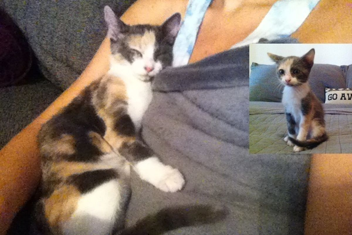 Young Woman Takes a Chance on a Calico, Cat Repays Her with Love She Never Expected